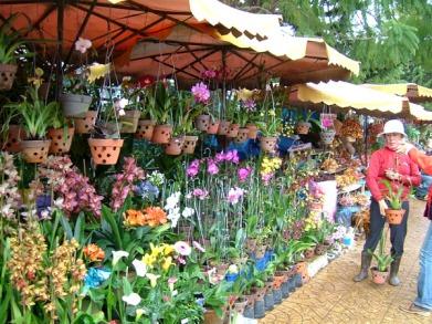 flower-market-at-dalat-vietnam